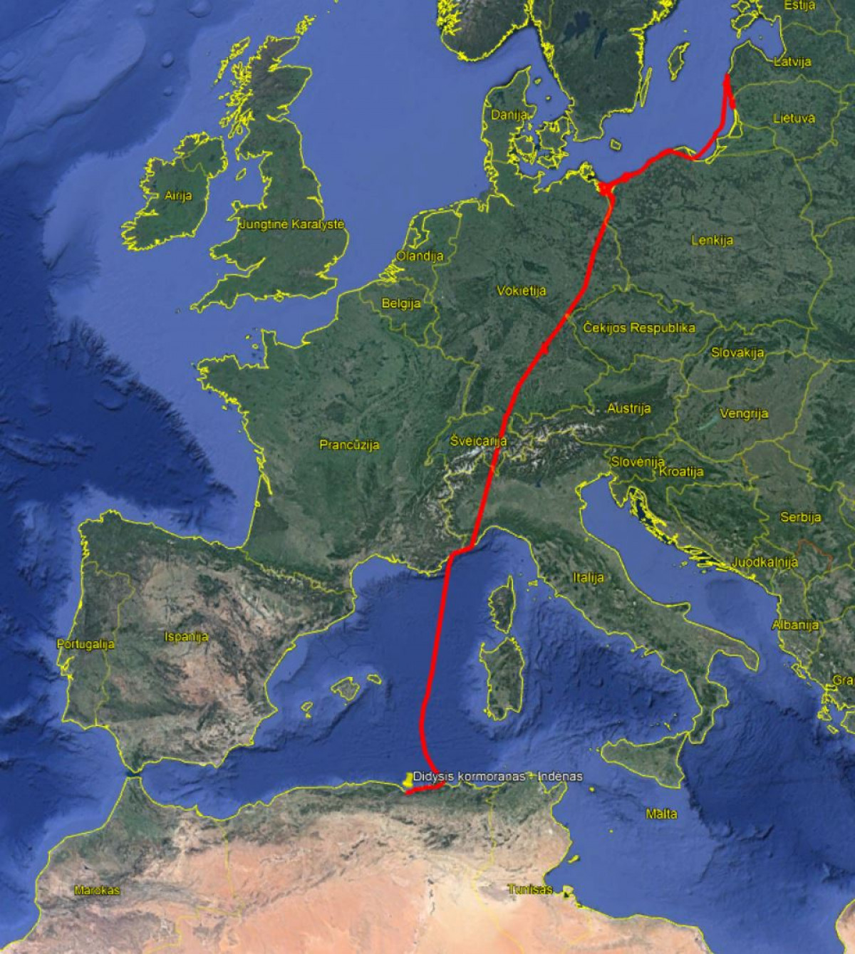 Stebinanti didžiojo kormorano migracija – palikęs Baltijos pajūrį pasiekė net Afriką
