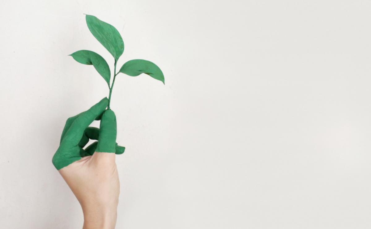 Bendras tyrimas parodė, kad beveik pusė žaliųjų teiginių nepagrįsti