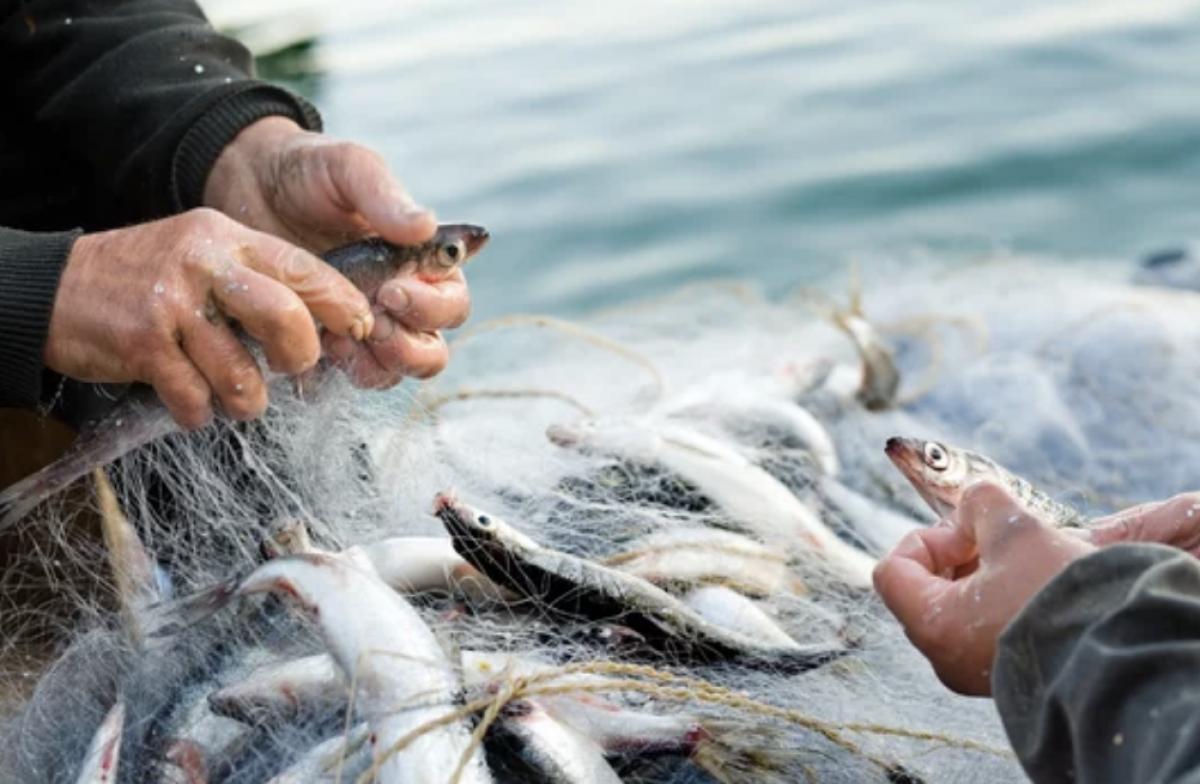 Neringos meras kreipėsi į LR Seimą dėl verslinės žvejybos – šio krašto identiteto - išsaugojimo