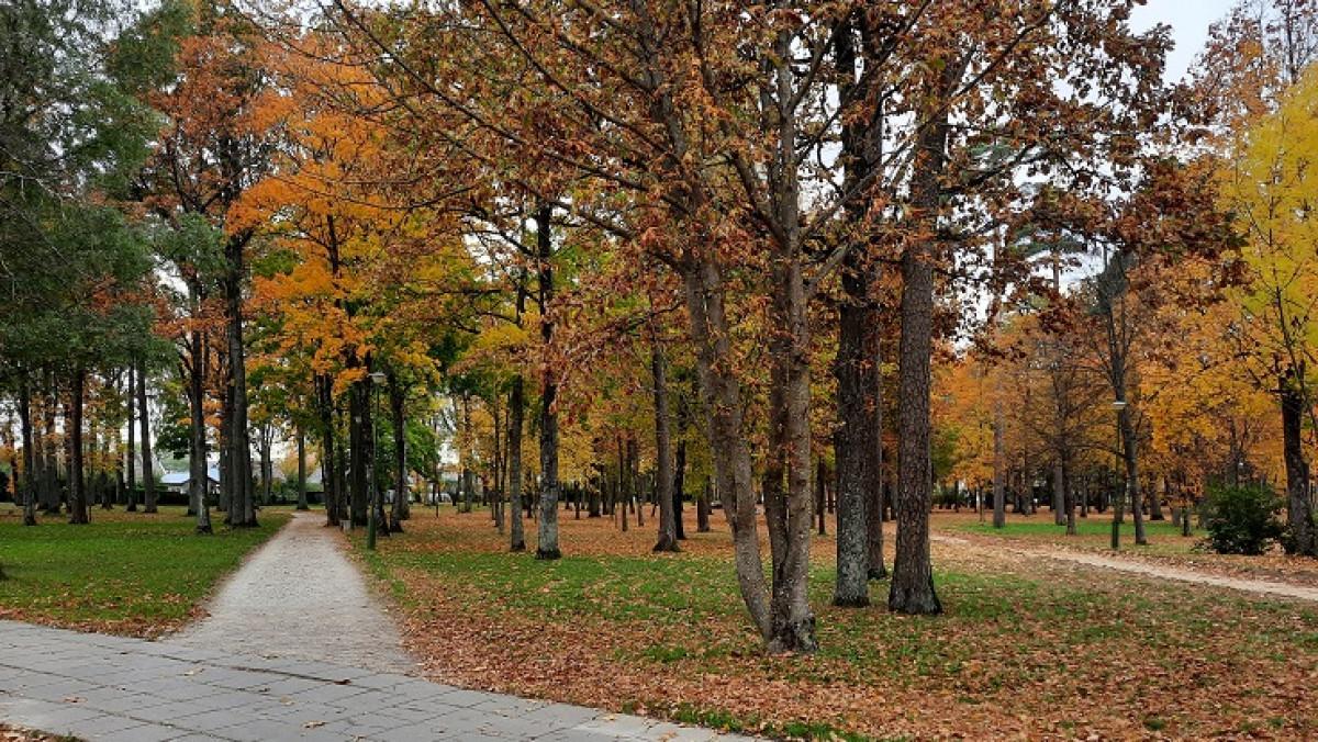Kretingos senojo parko tvarkymui skirtas Ekonomikos ir inovacijų ministerijos finansavimas