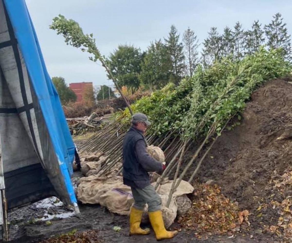 Šilutiškių skausmas – medžiai: vienus iškirtus jau sodinami kiti